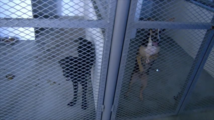 VIDEO Invita Asociación Protectora de Animales a adoptar mascotas