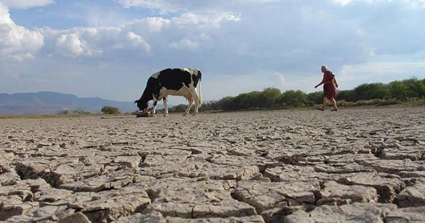 Mata la sequía a 600 animales en Tamaulipas