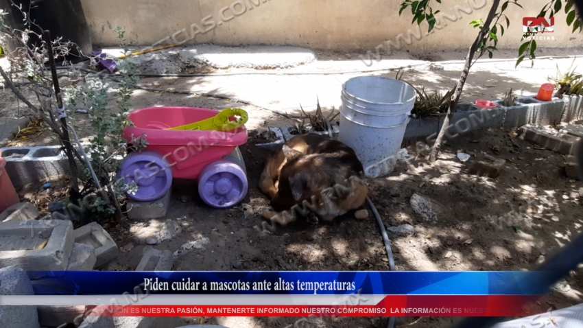 VIDEO Piden cuidar a mascotas ante altas temperaturas