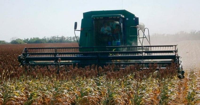 Cae producción de granos 850 mil toneladas