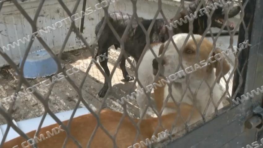 Invita Asociación Protectora de Animales a adoptar mascotas